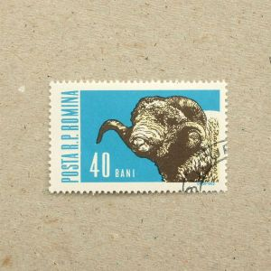 1962Romania005